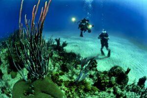 Frivillig_natur_dykning_rejse